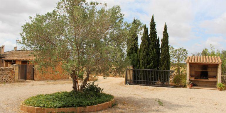 Hofeinfahrt mit Olive